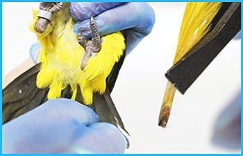 Pollygene Kit de Sexage par ADN Perroquets, Lovebirds (inséparable), Cacatoès. Plus de 300 Psittacidés [Spécial pour éleveurs]