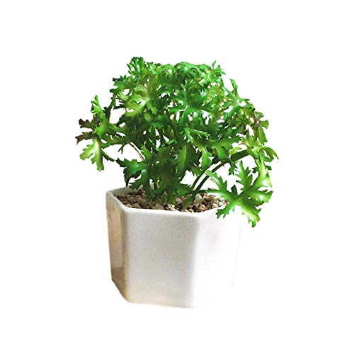 Baihua - Planta Artificial para macetas, Mace