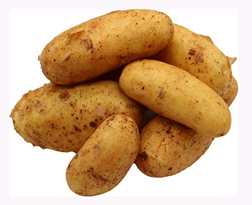 Bleichhof 2,5kg Neue Kartoffeln aus der Pfalz - Sorte: Annabelle festkochend Salatkartoffel
