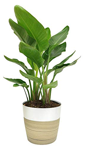 Best tall indoor plants