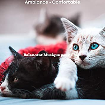 Ambiance - Confortable