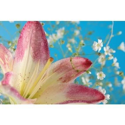 Lilly Flower 1934 Huile parfumée bougie et savon 454 g
