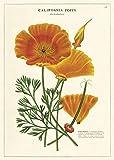 Cavallini Decorative Wrap Poster Poppy, 20 x 28 inch Italian Archival Paper...