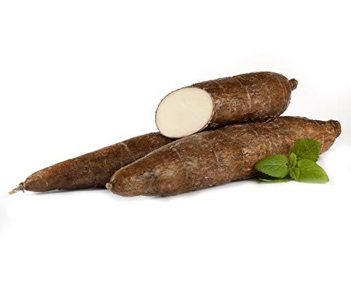 Maniok | Frischer Maniok | Fresh Cassava | Yuca Fresca |pro Knolle mit ca. 300 - 700 g Gewicht}