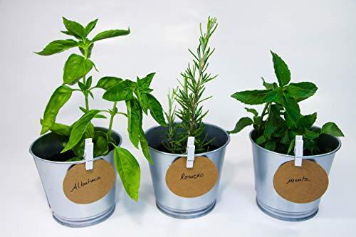 Kit de plantas para huerto urbano - Cultiva tus plantas aromáticas en casa - Semillas (Menta, Albahaca y Romero)