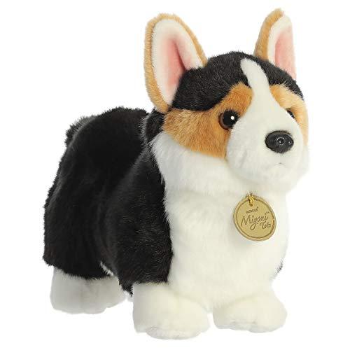 Aurora - Miyoni - 9.5' Cardigan Welsh Corgi Pup