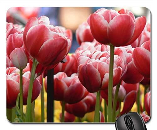 Mauspad Tulpen Blumen Natur Garten Pflanze Frühling Blumen Office Mauspad Mit Motiv Office Mat Niedliches Mousepads Matte Für Voyager Büro Cadeau 25X30Cm