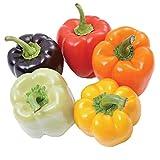 Semillas de chiles coloridos Más de 50 semillas de pimiento dulce Chilli Rainbow Mix Semillas Verduras orgánicas no transgénicas Hierba para el jardín