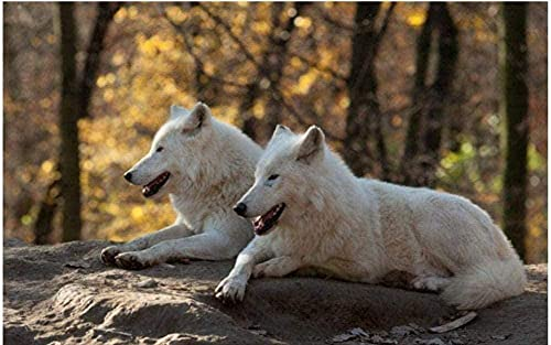 AMTTGOYY Pussel 1000 bitar barn vuxen -Två vita vargar ligger på stenen-DIY-kit Träpussel-Underhållning Reducerat tryck Leksak Klassisk Kul Inomhus Aktivitet Heminredning Gåva