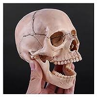 医療教育モデル 15ピース/セット4D分解スカル解剖学的モデル取り外し可能なティーチングツール 人間の臓器と皮膚のモデル