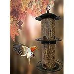 Heritage Deluxe Break Wild Bird Hanging Feeder Garden Seed Feeders Rainshelter Weatherproof …