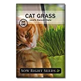 Sow Right Seeds - Cat Grass Seed for Planting - Easy to Grow Oat Grass That Your Cat Will Love - Non-GMO - Full Instructions - Great Gardening Gift (1 Packet)