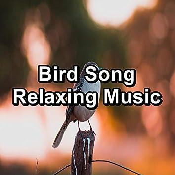 Bird Song Relaxing Music