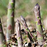 Premier Seeds Direct ASP02 - Semillas para Verduras (espárrago)