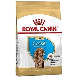 Dog Dog Food Dry Food PetFood Dog Dry Food