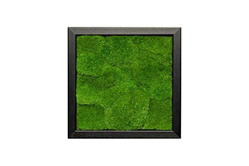 Moosbilder Wandgestaltung, Bild mit Moos und Bilderrahmen, Moosbild, Wandbild, Kugelmoos Moosplatte Pflanzenbilder Moosbilder versch. Maße günstig (schwarz 100% Kugelmoos)