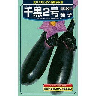 なす 種 【 千黒2号 】 種子 小袋(約1ml)