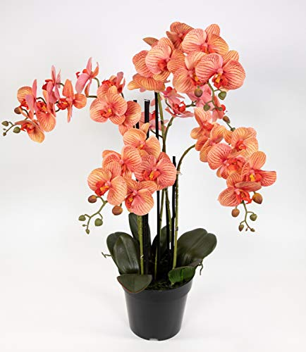 Orchidee 80x50cm Real Touch orange-Peach CG künstliche Orchideen Blumen Pflanzen Kunstpflanzen Kunstblumen
