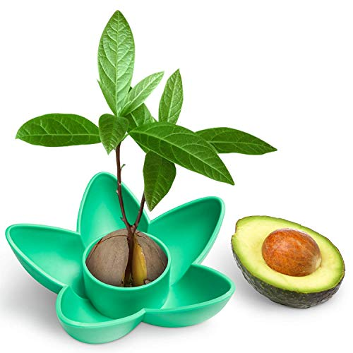 HENMI Avocado Planting Seed Bowl Avocado Tree Growing Kit Garden Gifts for Indoor Balcony Planting/Kitchen Gift Office Gifts Garden Seed Starter Gift/Practical Gardening Gifts for Women(without seeds)