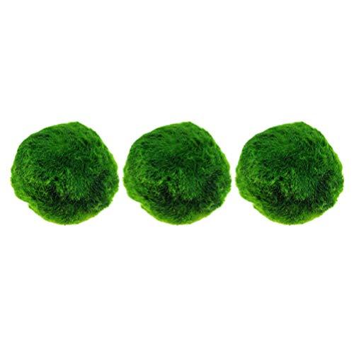 Hemobllo 3 Pezzi Marimo Moss Balls - 2cm Acquario Marimo Balls Fish Tank Decorazione Paesaggistica Palla Verde Marimo Muschio Piante Palla per Acquari
