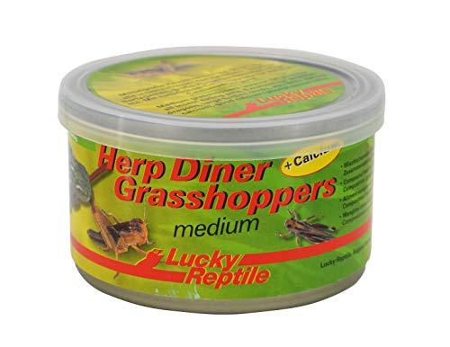 Herp Diner - Grasshoppers mittel 35 g, ca. 60 mittlere gekochte Heuschrecken