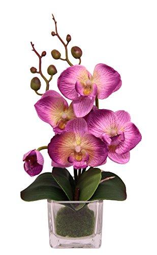 Flair Flower Mini Phalaenopsis im Glas, Stoff, rosa, 24 x 12 x 9 cm