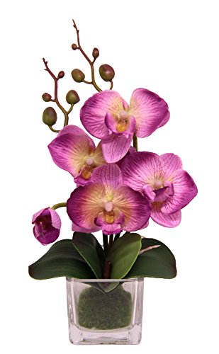 Flair Flower Mini Phalaenopsis im Glas,...