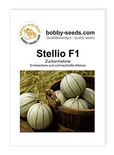 Bobby-Seeds Melonensamen Stellio F1 Portion