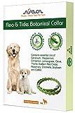 Arava Flea & Tick Prevention Collar (Full Review)