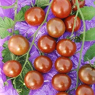 GEOPONICS Seeds - Black Pearl Seeds