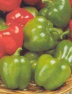 FARMERLY Seeds Package: Germination Seeds PLATFIRM-10 Seeds of PEP377 Jingle Bell (Sweet Bell Pepper)