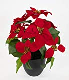 Seidenblumen Roß Weihnachtsstern 36cm rot im schwarzen Topf DP künstliche Blumen Pflanzen Kunstpflanzen Kunstblumen Poinsettie