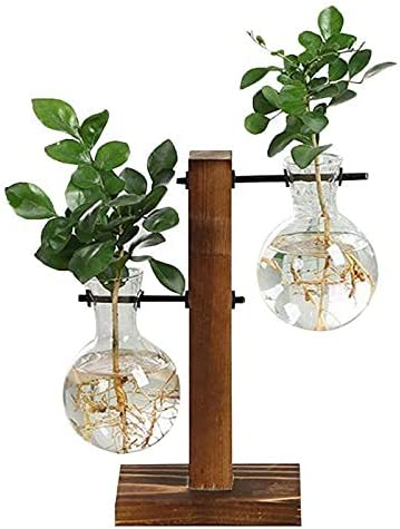 Special Simple Terrarium Hydroponic Plant Challenge the lowest price of Japan ☆ Flower P Vases Vintage Quantity limited