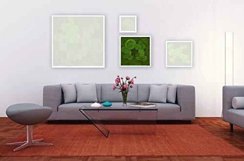 Moosbild Pflanzenbild mit Flachmoos und Kugelmoos versch. Maße günstig (Weiß, 45x45 cm)