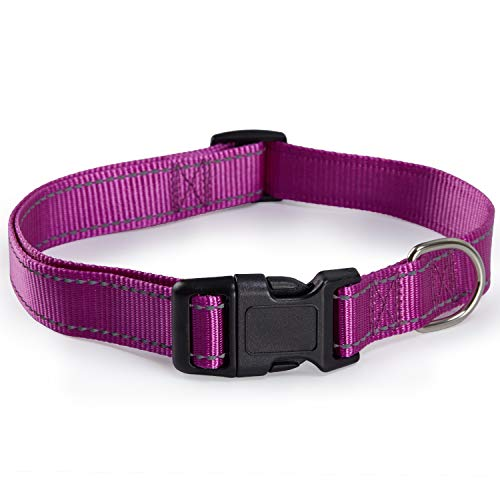 Reflective Dog Collar with Buckle