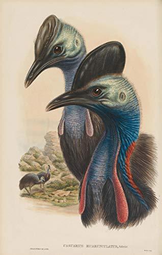 Flduod Pastoral Tier Vögel Strauß Landschaft Ölgemälde Leinwanddrucke gedruckt auf Leinwand Wand dekorative Bilder-50x60cm