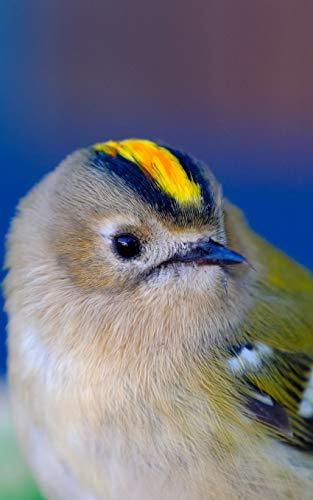 Notebook: Goldcrest Bird Small Birds Gold Crest