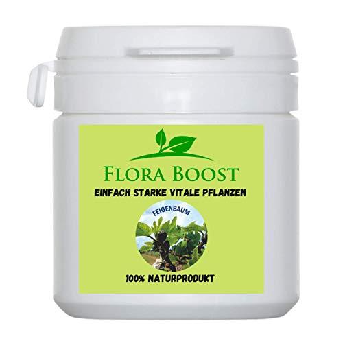 Flora Boost Feigenbaum Dünger Pulver -...