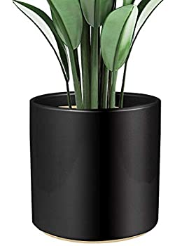 Shiny Black Ceramic Cylinder Plant Pot with Drainage 1 Pack 8 inch Large Ceramic Modern Round Planter Pot Glazed Flower Pots with Removable Rubber Plug for Indoor Outdoor Plant