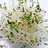 Alfalfa Sprouting Organic...image