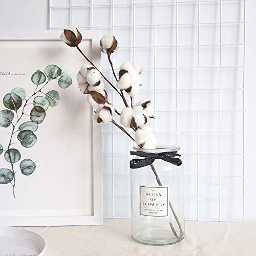 FeiliandaJJ 21 Zoll 10 Köpfe Getrocknete Blume Natürlicher Baumwollzweig Bauernhaus-Stil Künstliche Blume Füller Blumendekor für Wohnzimmer Home (Weiß)