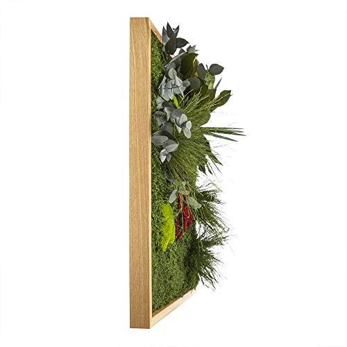 Moosbild ´Pflanze´ - Bildgröße 80 x 80 cm mit Tischler-Holzrahmen aus geölter Eiche