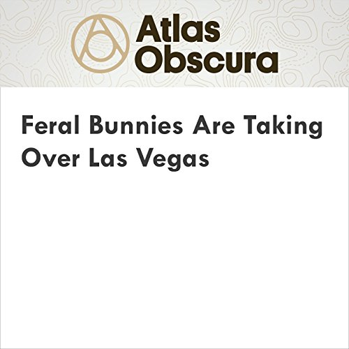 Feral Bunnies Are Taking Over Las Vegas audiobook cover art