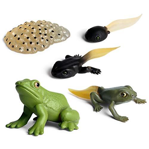 Lebenszyklus Frosch, Lebenszyklus eines Frosches Simulation Tierwachstumszyklus Spielzeug Interessante Lebenszyklus Tierfiguren Spielzeug Frühes Lernspielzeug für Kinder