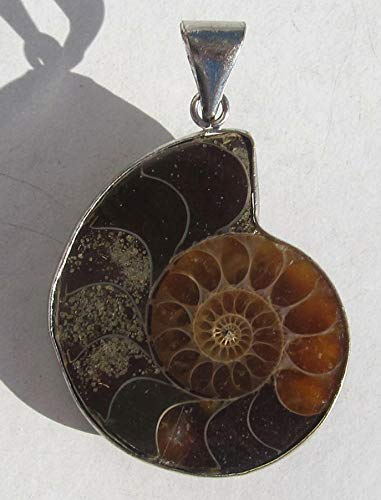 Edel-Depot Ammonit Anhänger, 45 mm, gefaßt, Ammonitenanhänger