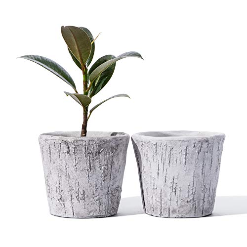 POTEY 054001 Cement Planter Pots - 5-Inches Birch Look Decorative Concrete Plant Bonsai Container with Drainage Hole for Plants Flower Aloe Indoor Home Decor(Set of 2, Plants Not Included)
