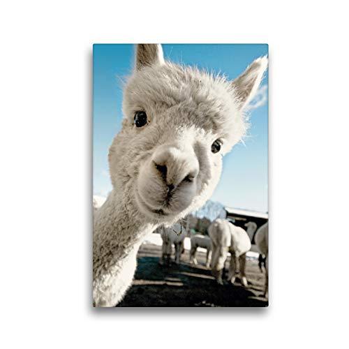 Premium Textil-Leinwand 30 x 45 cm Hoch-Format Selfie time Junges Alpaka mit weißem Fell | Wandbild, HD-Bild auf Keilrahmen, Fertigbild auf hochwertigem Vlies, Leinwanddruck von CALVENDO