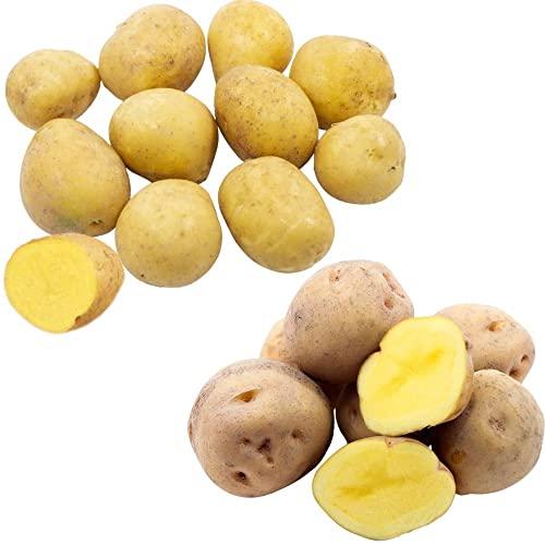 ギフト 食べ比べセット きたあかり(1kg) &インカのめざめ(1kg) [新じゃがいも] 北海道産 L/M混 2kg