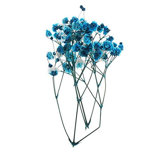 IPOTCH Echte Trockenblumen Blüten...