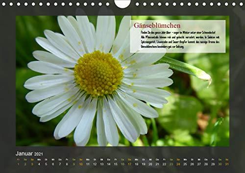 Outdoor-Survival-Kalender
